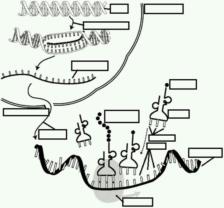 sanal biyoloji adlı kullanıcının ygs-lys panosundaki Pin