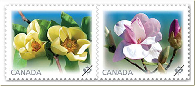 Magnolias 2007