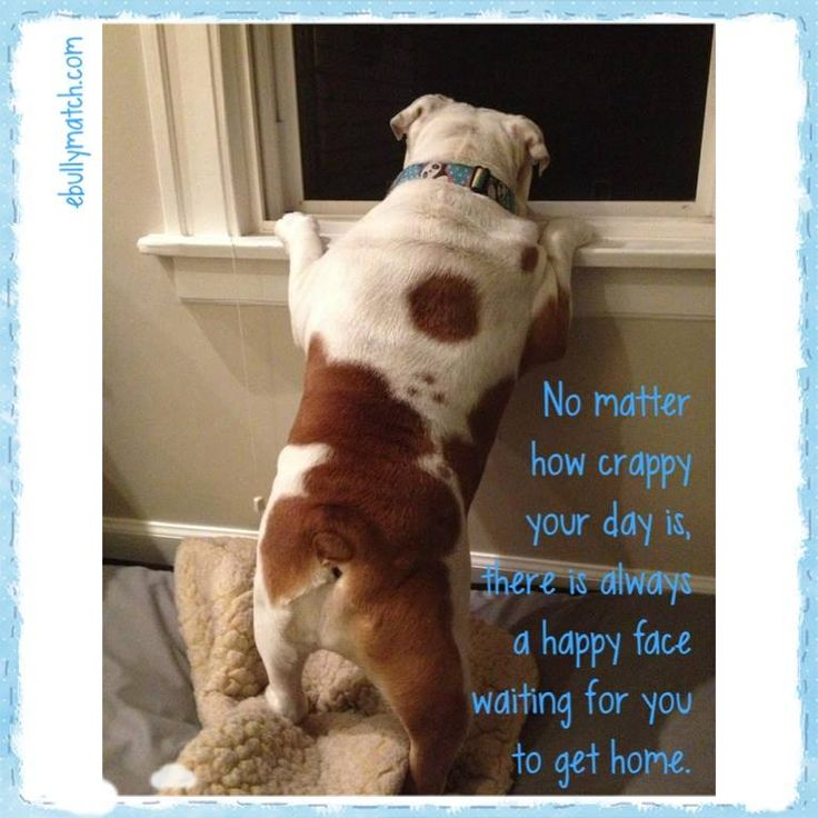 "❤ ""No matter how crappy your day is, there is always a HAPPY FACE waiting for you to get home"" ❤ Posted from Chicago English Bulldog Rescue, Inc."