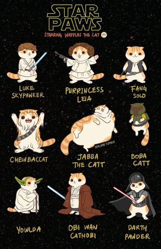 Star Wars con gatos es más mono