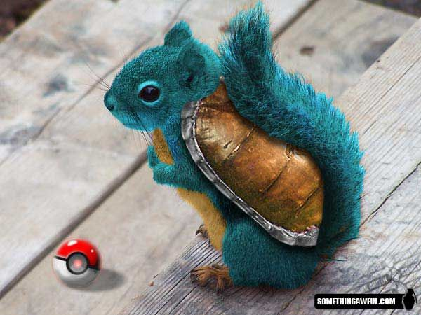 Squirtle irl | Not Pinterested. | Pinterest | Photoshop ...