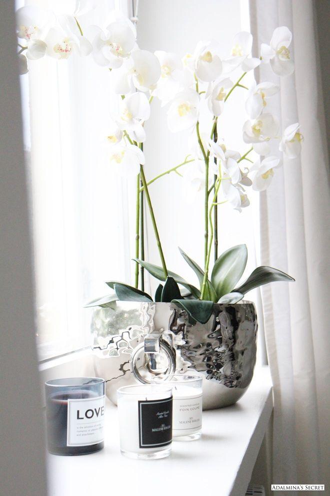 die besten 25 orchideen ideen auf pinterest orchideenpflege wachsende orchideen und. Black Bedroom Furniture Sets. Home Design Ideas