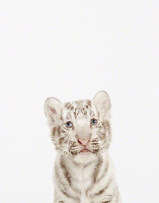 LittleDarlings - Amazing Baby Animal Close-ups