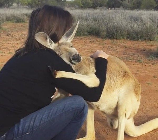 Rescued Kangaroo Starts Off Each Day With A Hug