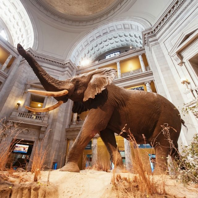 Did you know the Natural Museum of History is the most visited Smithsonian museum in the U.S.?  No matter what museum you visit in Washington, D.C., we have five area hotels waiting for you: