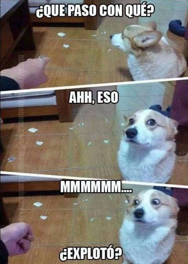 Perro inocente.