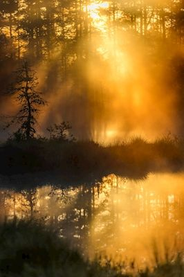 Sunset in early morning in a little forest, Sweden.Available as poster at printler.com, the marketplace for photo art. Photographer Larz Karlsson.