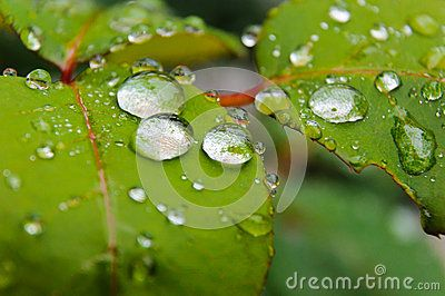 Rain Drops Macro Nature Leaf Green - Download From Over 24 Million High Quality Stock Photos, Images, Vectors. Sign up for FREE today. Image: 41933428