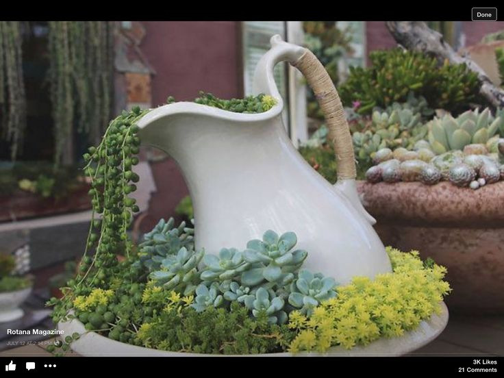 Neat pitcher planting