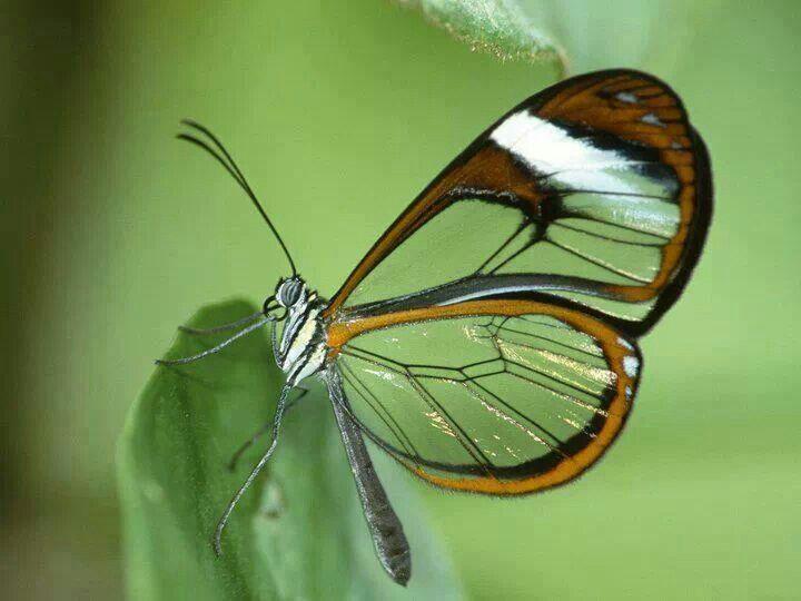 Beautiful Butterfly :^)