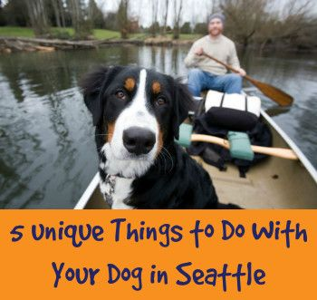 5 Unique Things to Do With Your Dog In Seattle