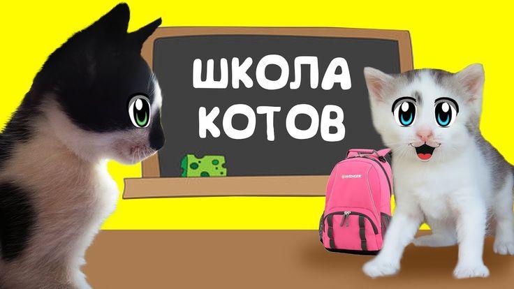 КОТ МАЛЫШ И КОШЕЧКА МУРКА идут в КОШАЧЬЮ ШКОЛУ ! УРОКИ для котов НОВЫЙ ЧЕЛЛЕНДЖ для вредного котенка ! Семья котов с канала А ну-ка Давай-ка готовят свою кошечку МУРКУ к школе! ШКОЛА КОТОВ или КОШАЧЬЯ ШКОЛА вот вот начнется! Кот малыш - которого вы помните как КЛУБНИЧНЫЙ КОТ МАЛЫШ будет обучать кошку мурку интересным трюкам. Кот МАЛЫШ постарается научить свою сестренку всему что сам умеет. КОШАЧЬЮ ШКОЛУ проходят все коты и наши милые котята не исключение. Наши ВРЕДНЫЕ ДЕТКИ малыш и мурка…