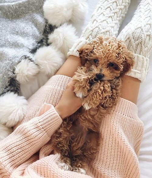 I want a little Toy poodle of my own :( I'll be looking at @ShopPriceless FURRY AND FUZZY FRIENDS board while I wait!