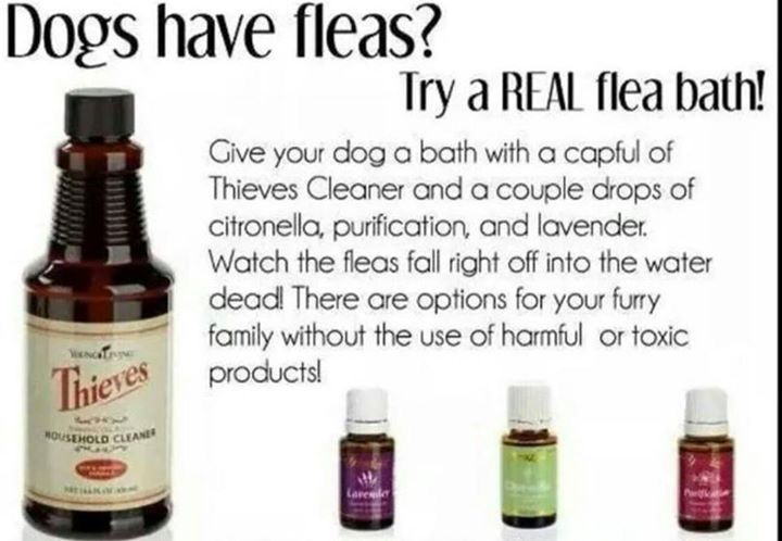 Flea bath for dogs using Young Living EO products!