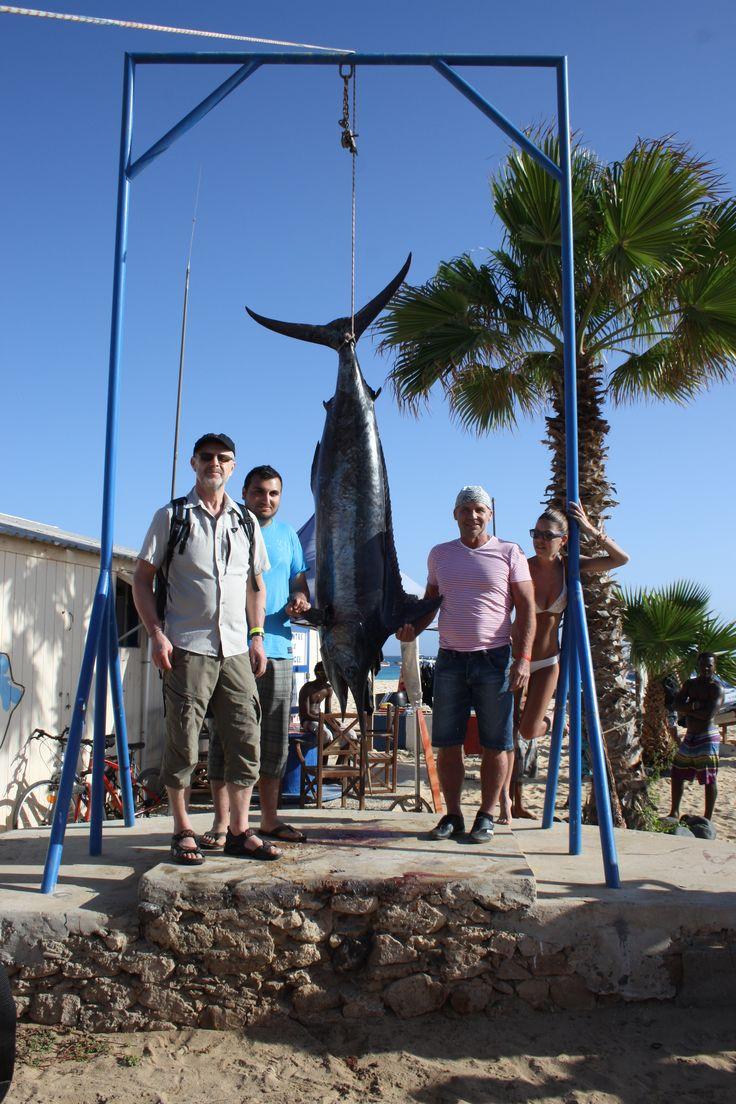 Cape Verde Map World%0A Fishing in Cape Verde   Capeverde  Caboverde  Sal  Biggame  marlin