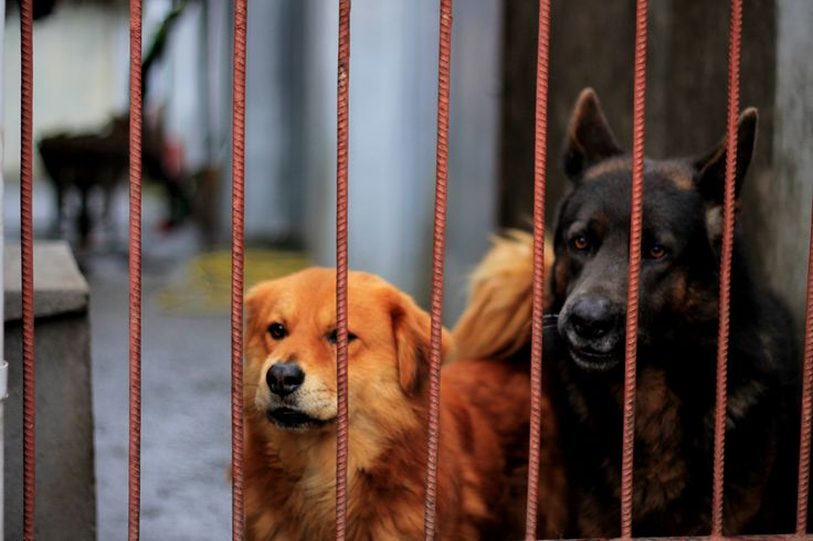 Perros - Fotografía por J.Simone