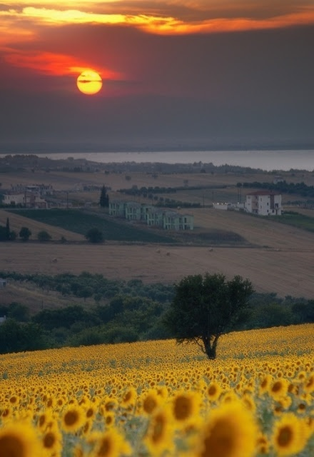 Italy. There is something so gothic-Jane-Eyre/mysteriously alluring about this photo and these fields.