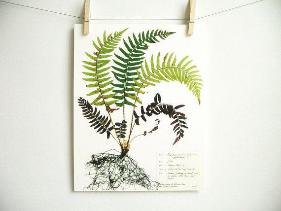 Western Sword Fern Print, #62, fern herbarium specimen pressed botanical print plant art fern with f