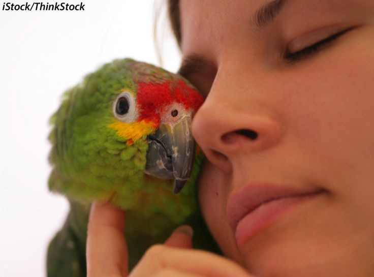 "3 Things You Should Know About How Parrots ""Feel"""