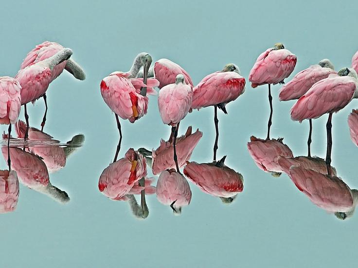 .Silent Reflections, Birdschildhood Memories