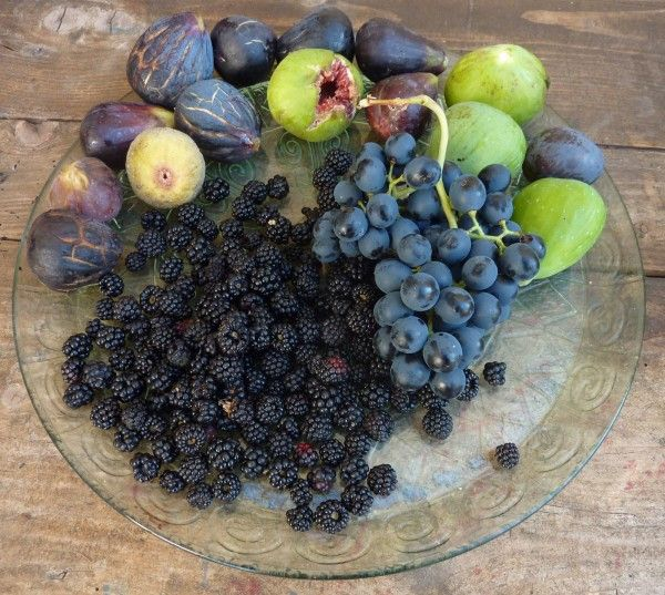 September 2012 - picking wild figs and grapes from the hedgerows around http://villaroquette.com