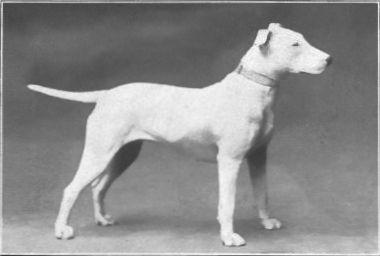 dalmatian terrier mix temperament - Google Search