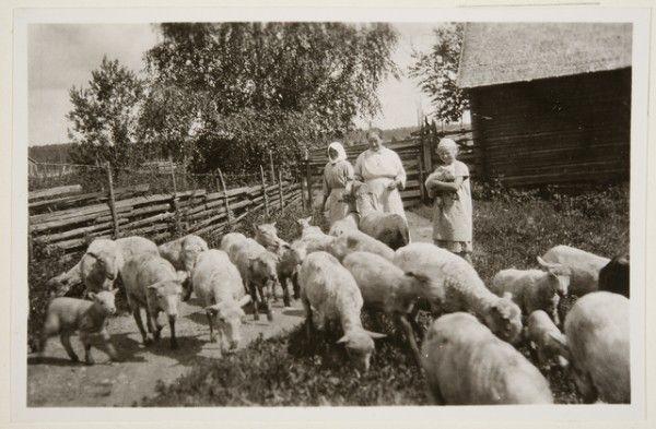 """""""lampait ajetah"""", Haapakimola Kaltula. Oksanen Aino, kuvaaja 1927"""