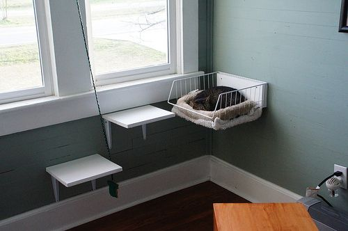 it never occurred to me to attach a cat bed to the wall. I really am going to create some shelving/play stuff for Norman cuz it's my house and my cat and dammit I do what I please.