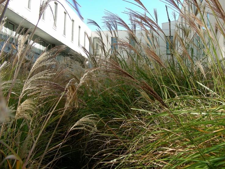 Les 97 meilleures images propos de gilles cl ment for Jardinier paysagiste lyon