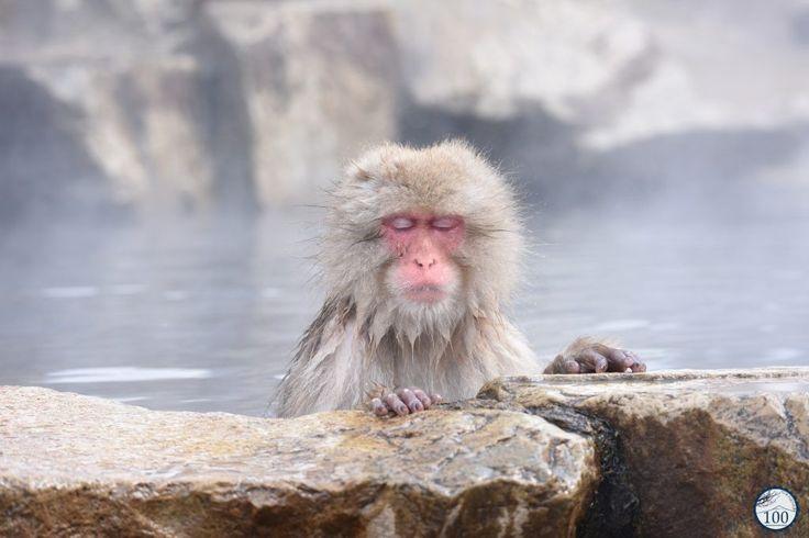 La Vallée de l'enfer, un paradis pour les singes des onsens