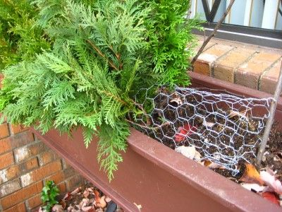 Close up of evergreens being added to chicken wire form- adding color to flower boxes during the winter