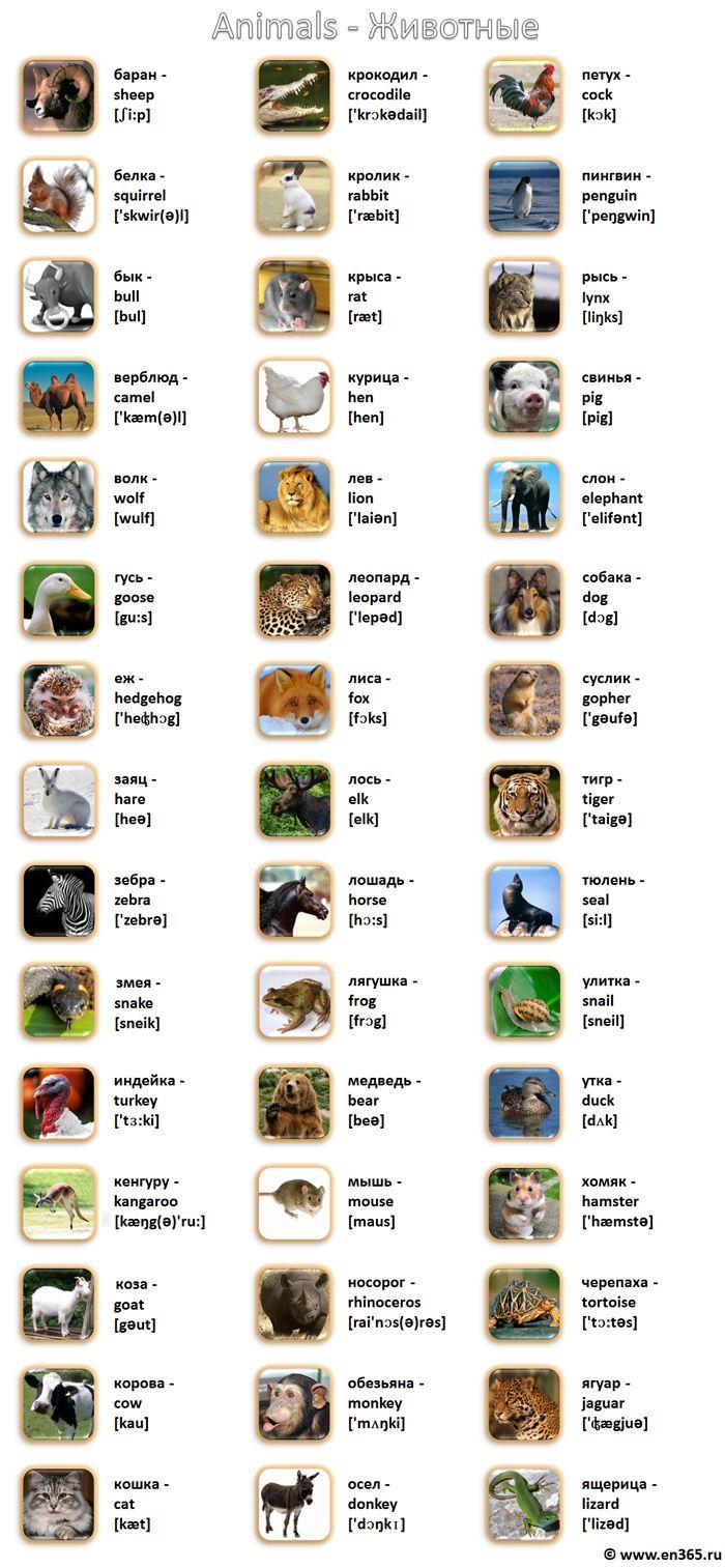 Животные на английском языке в картинках с переводом. Названия животных по-английски с переводом