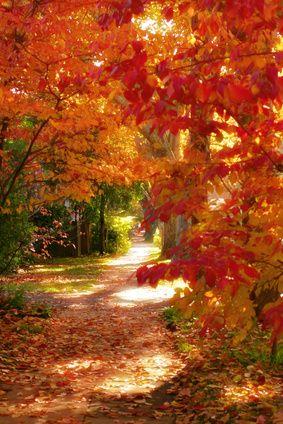 Autumn lane -- I'm not a sun worshiper but this sun dappled path seems to beckon a walk in the woods.