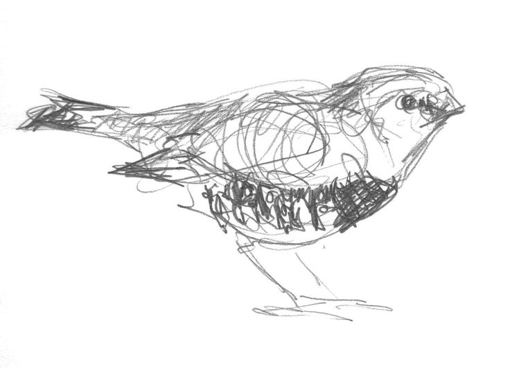 bird sketches you can print | An Evening With The Ulster Orchestra