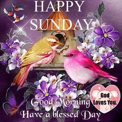 Happy Sunday Good Morning Have A Blessed Day Good Morning Sunday