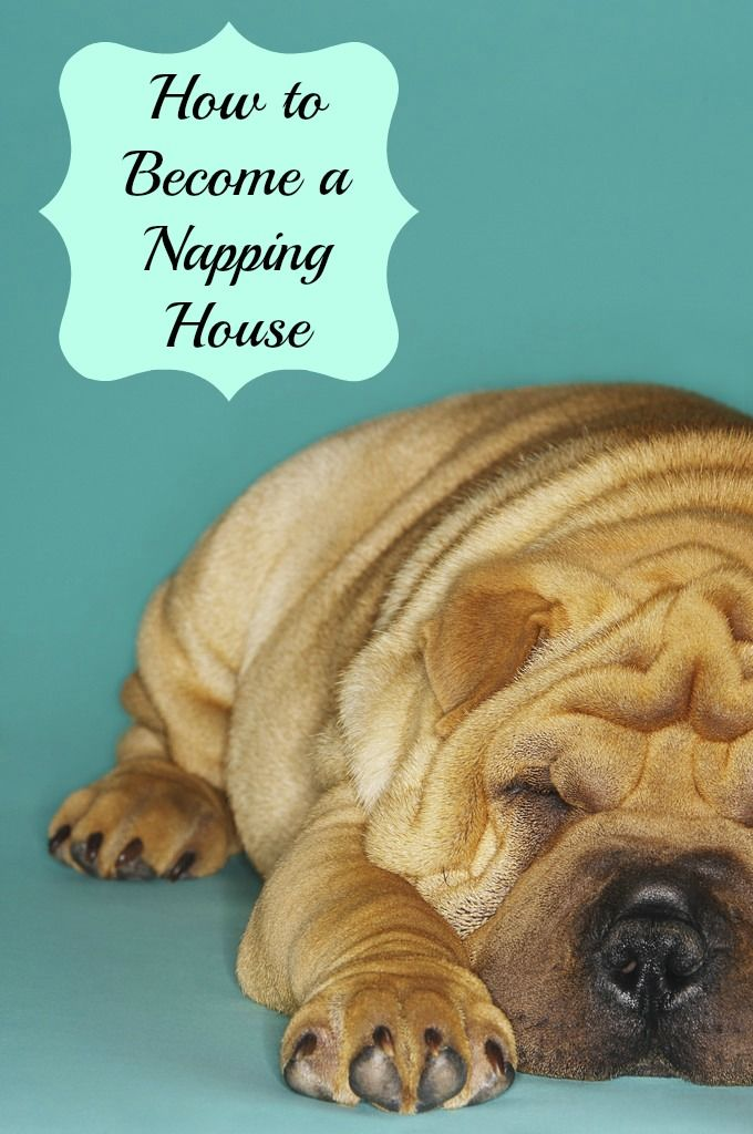 Learn how to nap, even if your kids insist they aren't tired!
