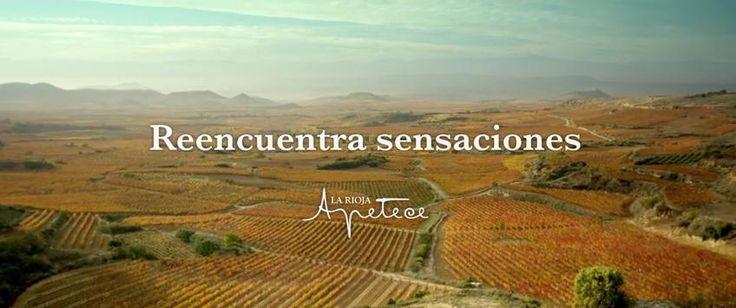 Marketing Vinícola Reencuentra sensaciones Enoturismo en La Rioja