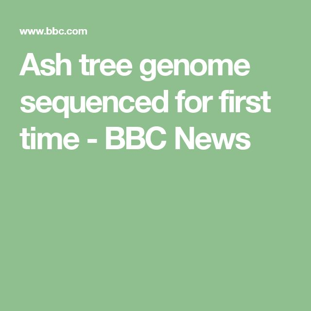 Ash tree genome sequenced for first time - BBC News