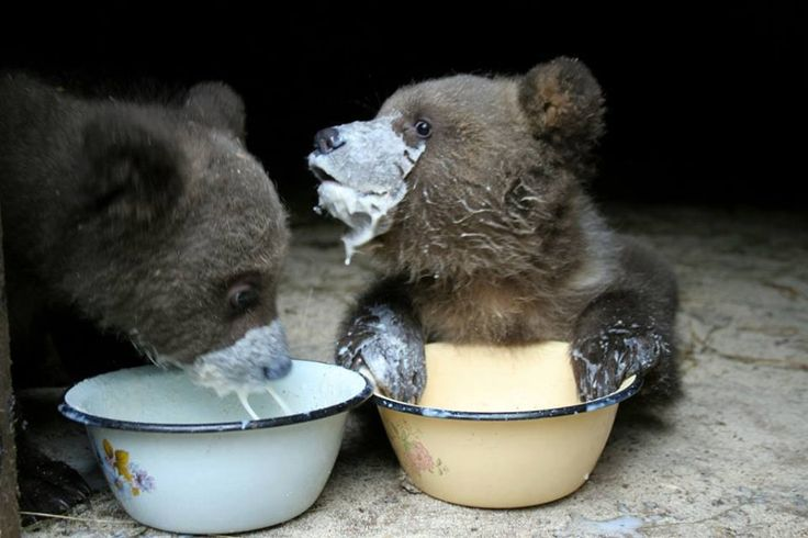 Baby Bear Breakfast