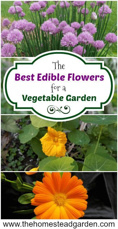 Die besten essbaren Blumen für einen Gemüsegarten –