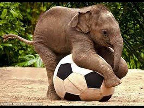 FUNNY ELEPHANT VIDEOS | FUNNY ELEPHANT COMPILATION [NEW] - YouTube