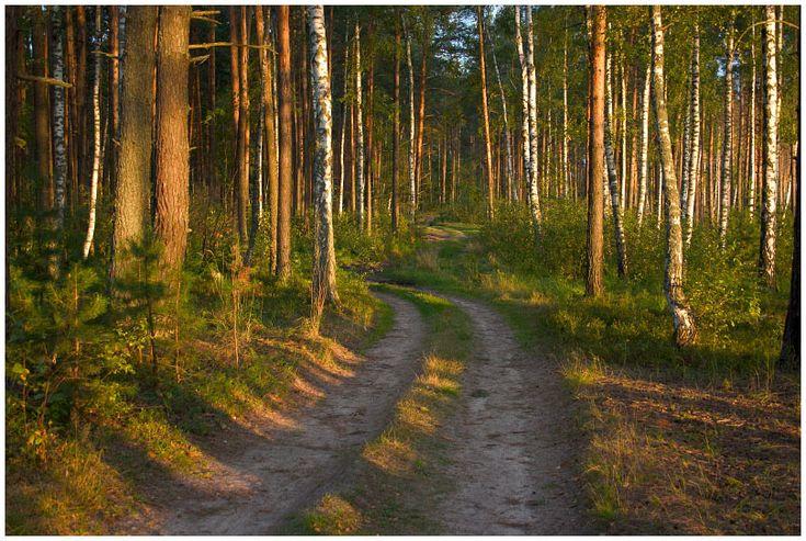 Лесная дорога - Красивые летние фотографии