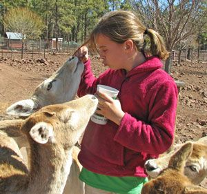 Fun things to do with kids near the Grand Canyon: Grand Canyon Deer Farm and Petting Zoo.