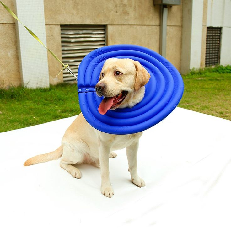 Fosinz Pet Collars Dog Protective Inflatable Mask Cat Recovery E-Collar Water-resistant Nylon Fabric and Soft Hollow EPE Foam Does Not Block Vision -- Find out more about the great product at the image link. (This is an affiliate link and I receive a commission for the sales) #MyDog
