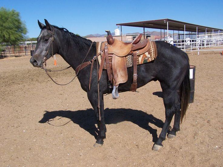 Black Quarter Horses Barrel Racing   www.pixshark.com ...