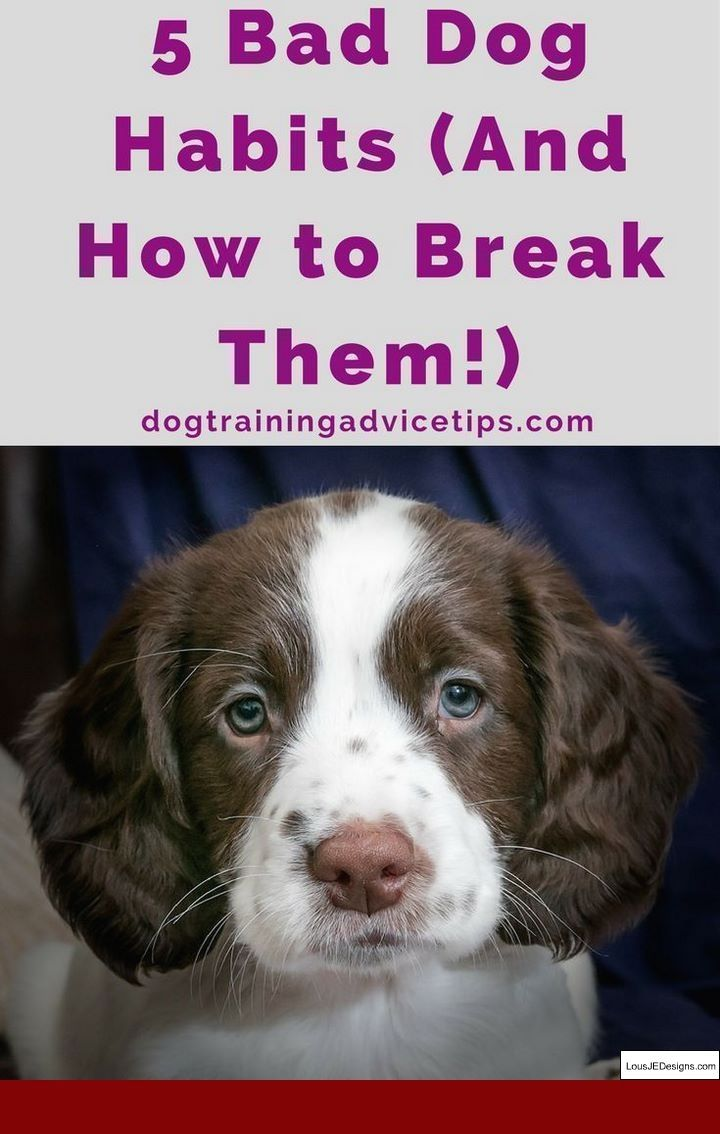Dog Training Tips For Doberman And Pics Of How To Train A Deaf Dog