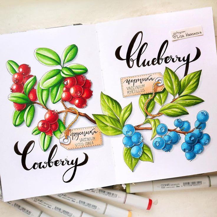 2/8 theme of my drawing challenge- eatable forest berries.  Тестирую новый блокнот на новый теме нашего с @art_markers марафона :) Задание 2/8 - съедобные лесные ягоды! Вспоминаем уроки биологии и рисуем вкусняшки до пятницы! Не забываем хэштэг #lk_sketchflashmob ;)