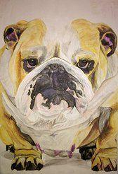 Pet Portraits - British Bulldog - watercolour pencils