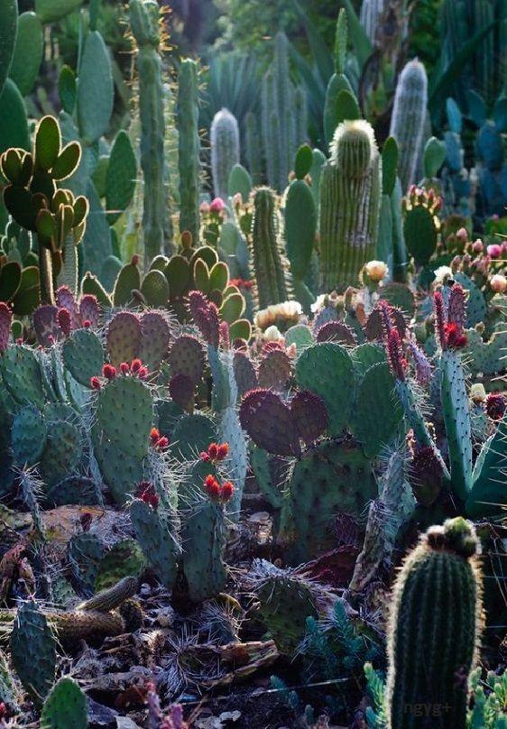 Jelenségek: Kaktuszok - vadak és szabadok