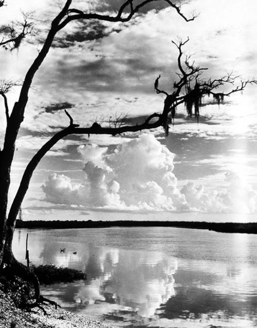 """Weeks Bayou at Weeks Island, Louisiana"" 1950, photo by American photographer TODD WEBB (1905/2000)"